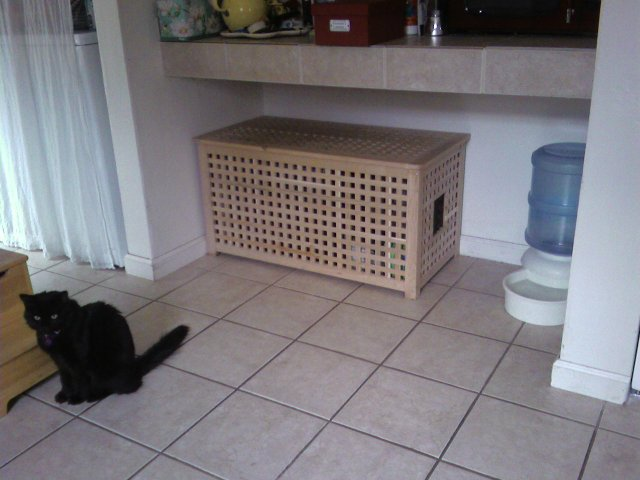 How To Deal With A Cat That Poop Outside Litter