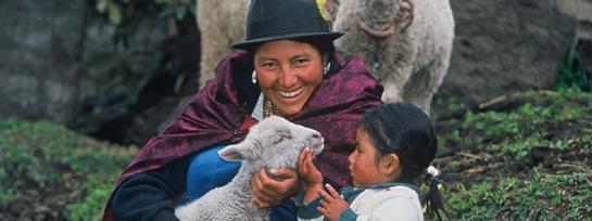 Sheepgift